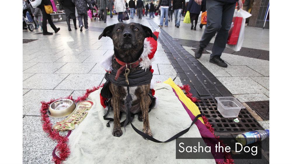 Sashathedog_text.jpg