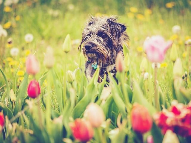 #tulipfestival #photography #rhodeisland#farmers#snakedenfarm#tulips#grass#green#organic 📷: @halliejaade