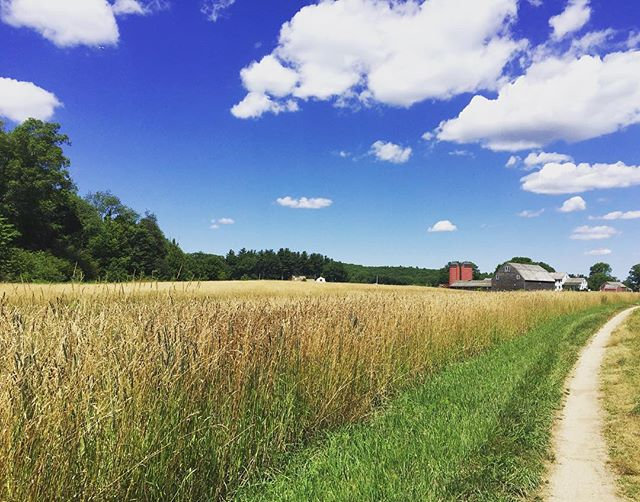Beautiful #July days are here at #snakedenfarm in #rhodeisland 🌞