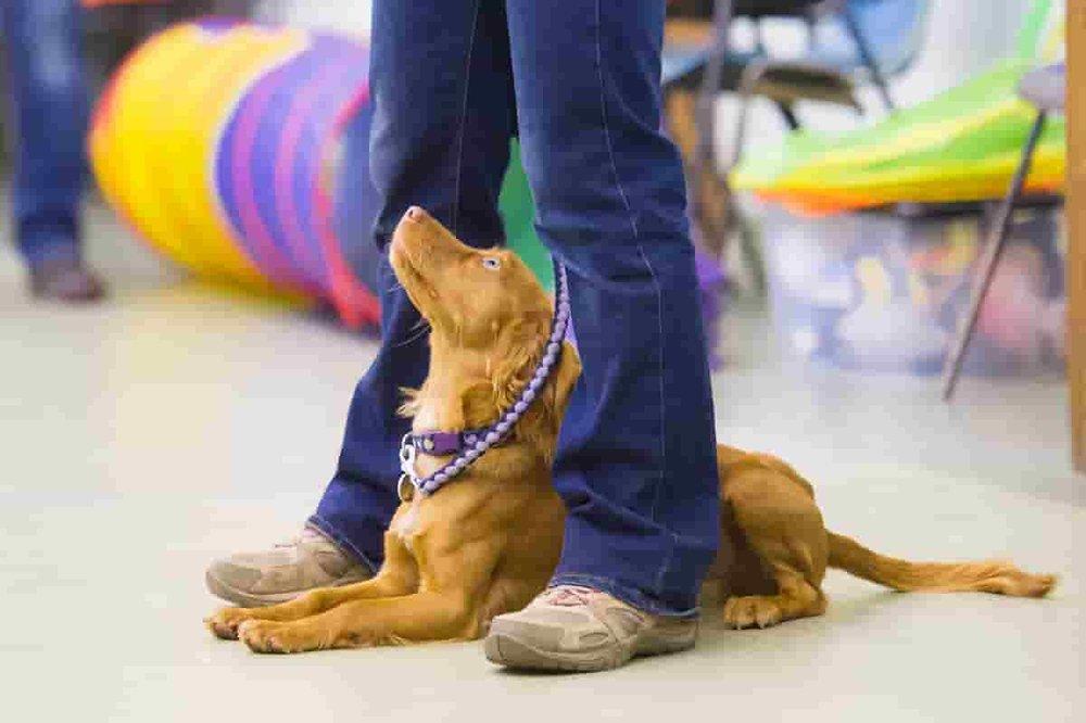 Puppy school -