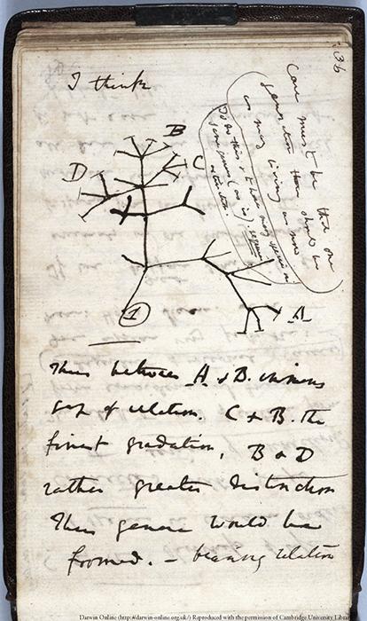 Darwin naplórészlete