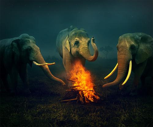 134 5 elefántok.jpg