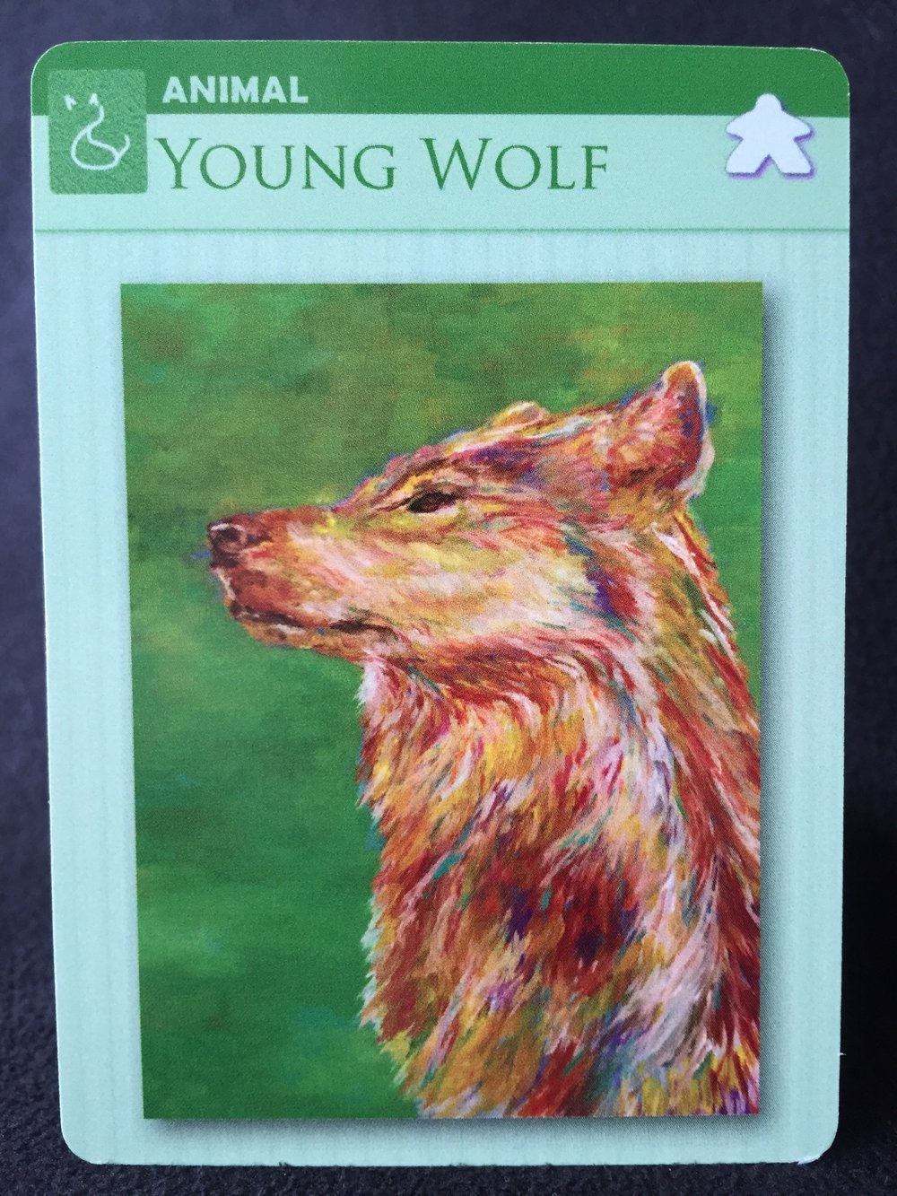 animal young wolf.jpeg