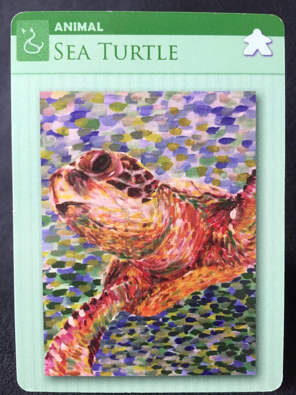 animal sea turtle.jpeg
