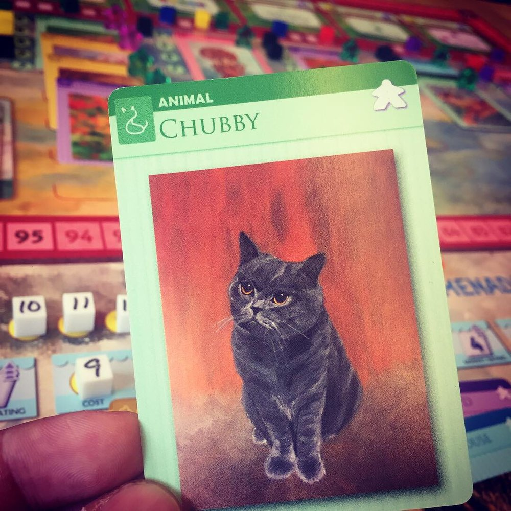 """It's hard to not shout """"Chubby!"""" when exhibiting this adorable chubby guy."""