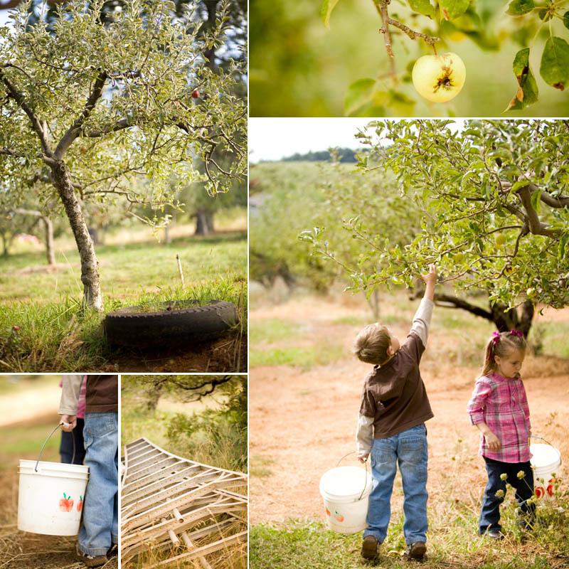 children's photographer - apple hill, camino, ca
