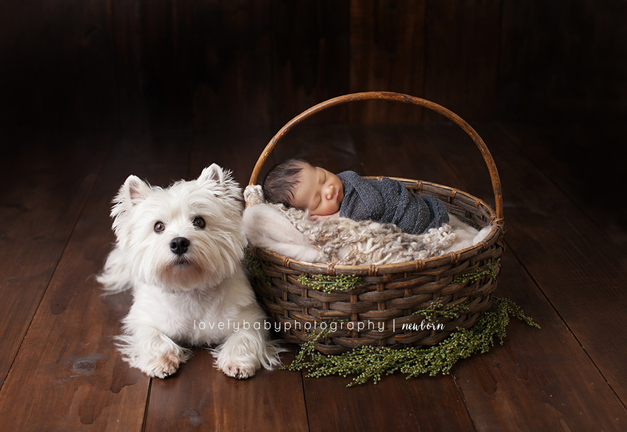 sacramento newborn photographer with big brother terrier