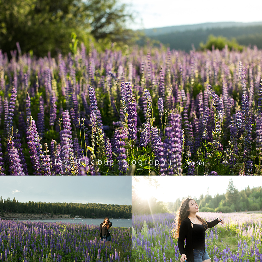 01 lupine field photography lake tahoe