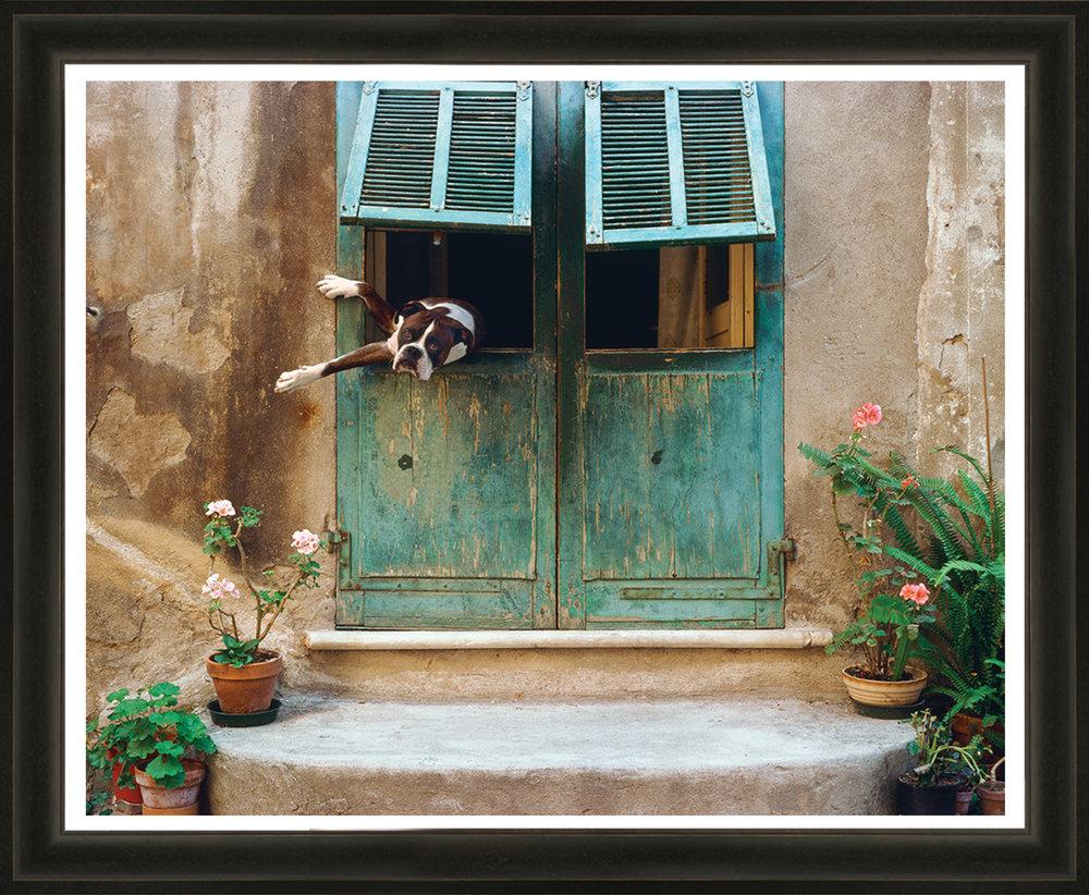 Cucciolo-II-F.jpg
