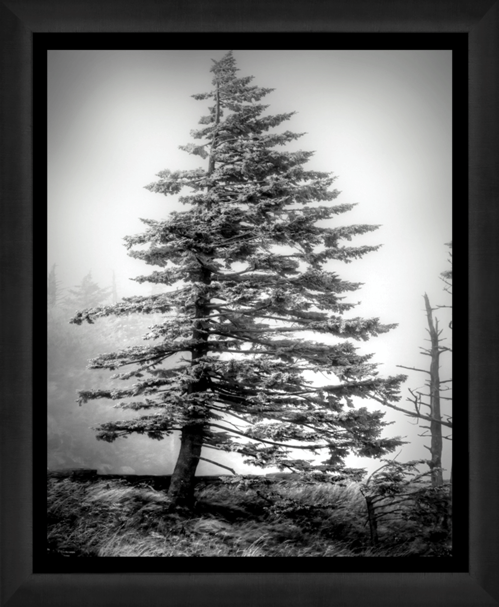 Fortitude,-Smokey-Mountains-(P).jpgf.png