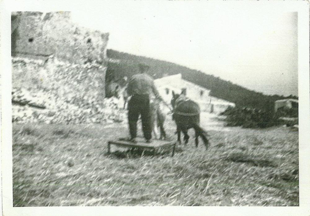 Miembro de la familia Gázquez trillando trigo. Finales de la década de los 60.