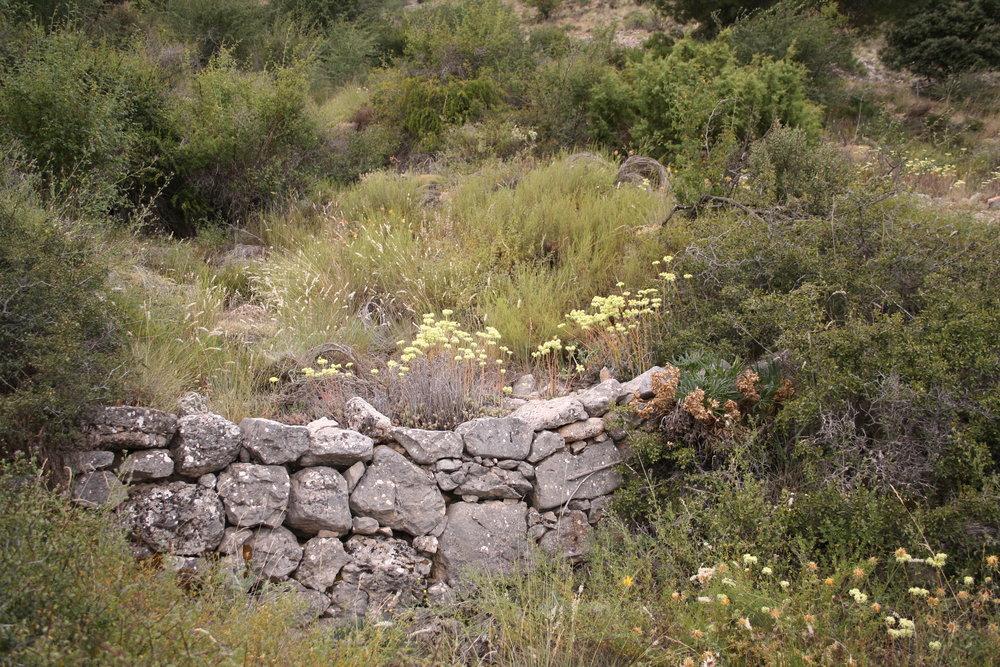 Hilada de piedras en un barranco que ha sido diseñada para frenar el paso del agua de la lluvia.
