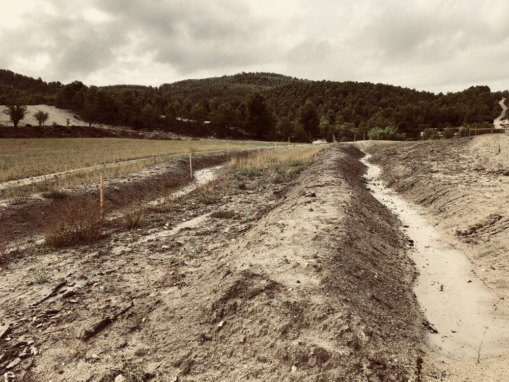 Yesterday's storm illustrates just how the Joya: swale construction works. Rainfall has been retained and over time this will accumulate under ground providing a humidity reservoir for the coming plantation this winter.
