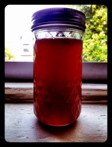 Autumn plum shrub!