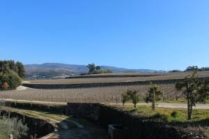 Vineyard at the border of the Dao & Beira regions, courtesy Worldwine Marketing