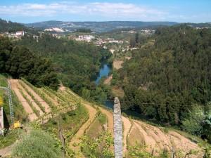 Landscape_Vineyard and River