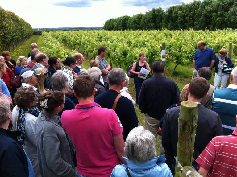 wine tourism is expanding in the UK, photo at Giffords Hall courtesy of the winery