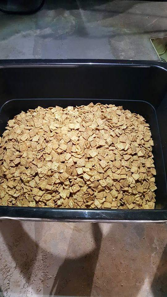Cinnamon Toast Crunch cereal being loaded into the mash at Devour Brewing, photo Phil Galewitz