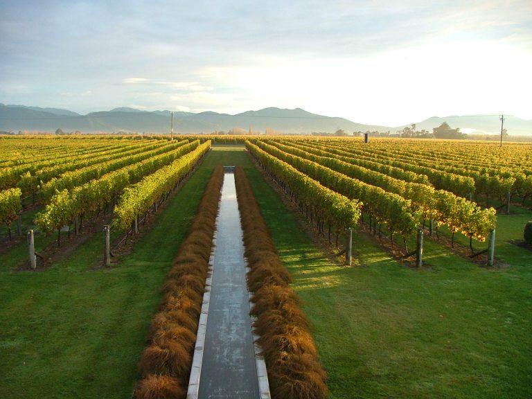 Villa Maria winery, Malborough