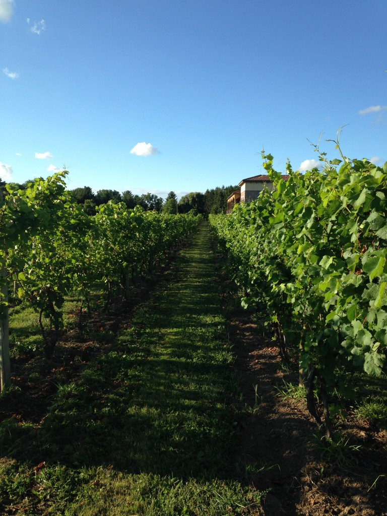 Ventosa Vineyards, photo by Christine Campbell