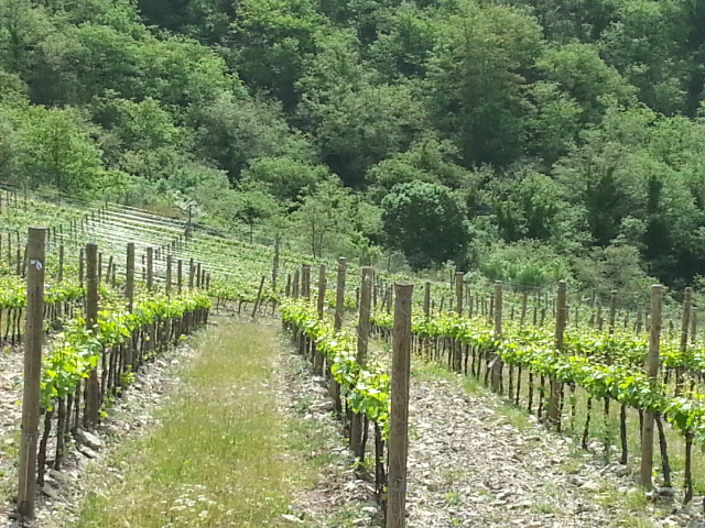 Il Solatio single vineyard
