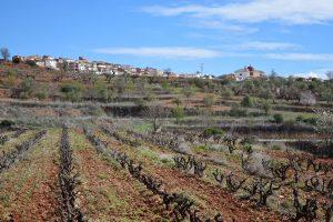 montsant-vines-300x200.jpg