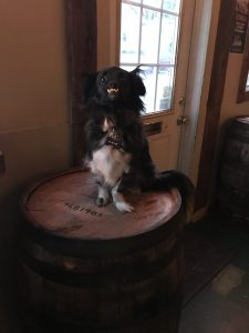 Brady hangs perched on a bourbon barrel at dog-friendly bar The Pearl, photo by Amanda Schuster