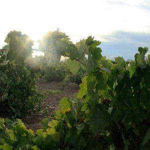 Bodega Matsu, courtesy vinosdetoro.com