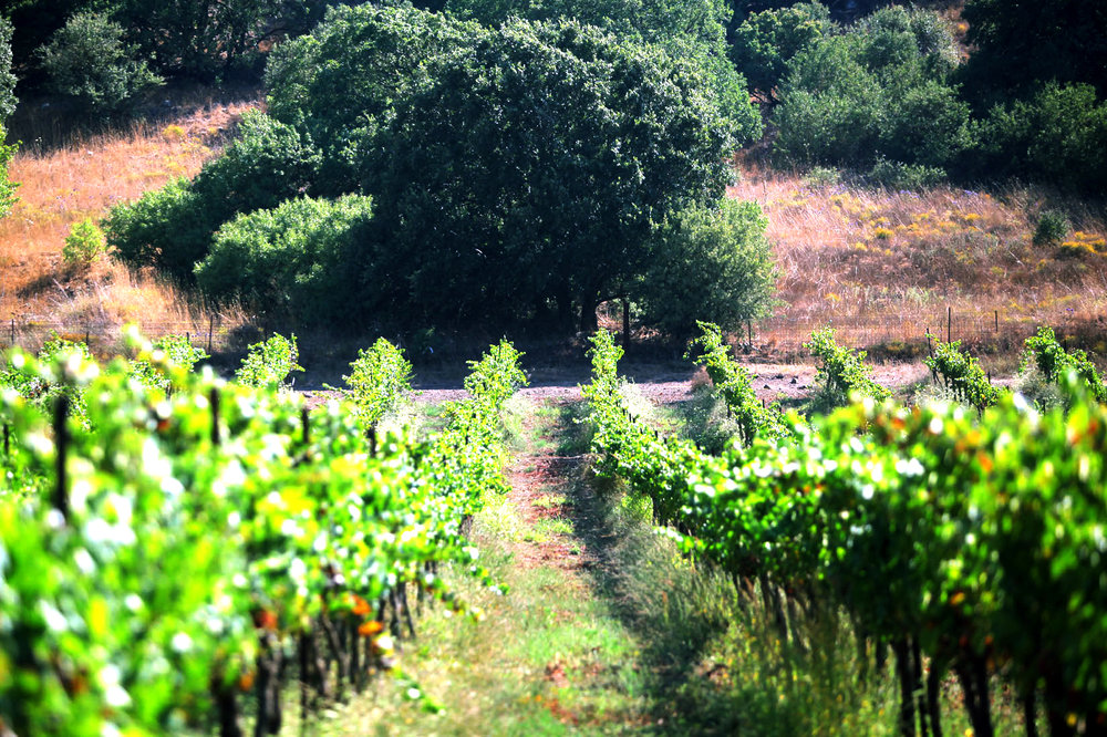Loa Avital Vineyard