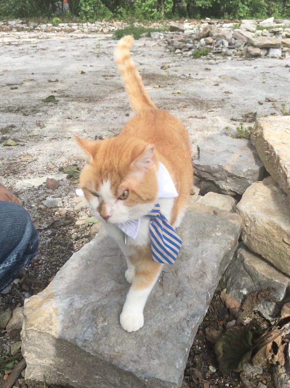 Rick the Cat