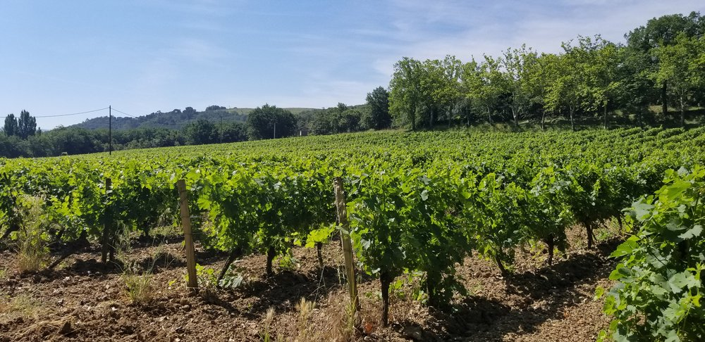 Clos d'Ora vineyard, photo by Kelly Magyarics