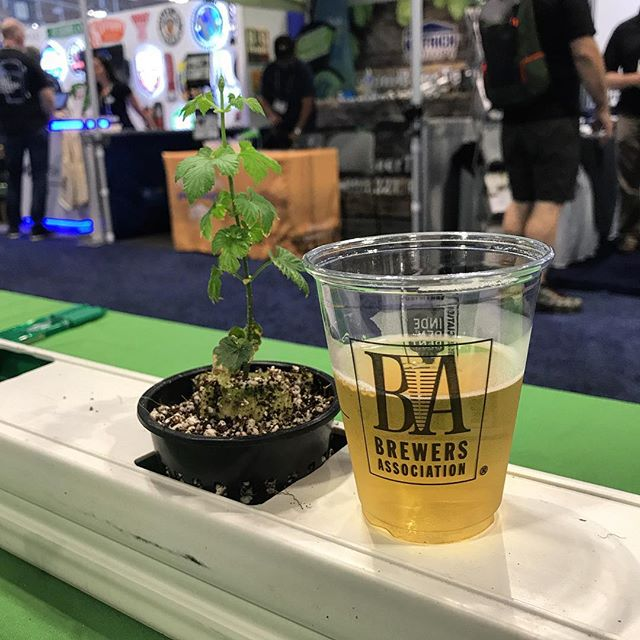 Working hard? Or hardly working? It's not really work when you're having fun! Day 2 of #CraftBrewersCon is underway and we were completely overwhelmed yesterday by the number of people who stopped by our booth! Keep the visits and the questions coming. . . . . . . #yourhopshouse #hopshouse #hydroponics #hydrohops #growbeer #takecraftback #craftbeer #hops #hopsfarm #farm365 #growsomethinggreen #modernfarmer #farmers #farming #binetobrewery #brewery #brewbeer #cincygram #beerlovers #beerlover #beerstagram #drinklocal #cincybeer #untappd #urbanfarming #agtech #entrepreneur #startup