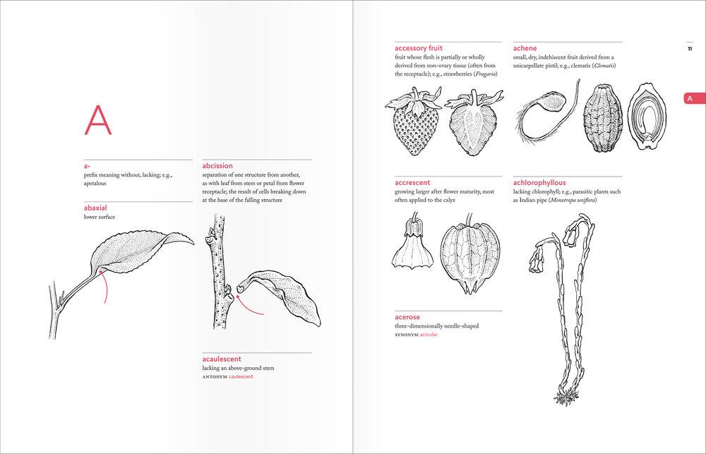 PellAngell_BotanistsVocab_finalpages_spreads_A.jpg