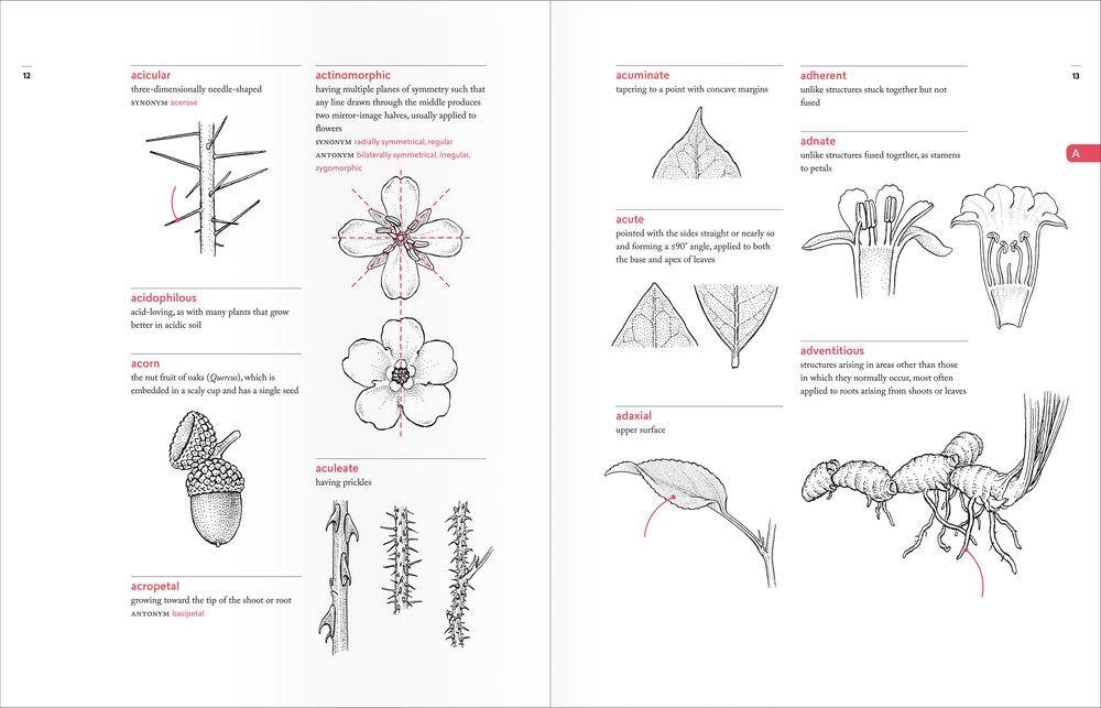 PellAngell_BotanistsVocab_finalpages_spreads_A2.jpg