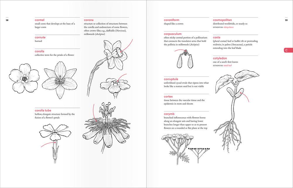 PellAngell_BotanistsVocab_finalpages_spreads_C.jpg