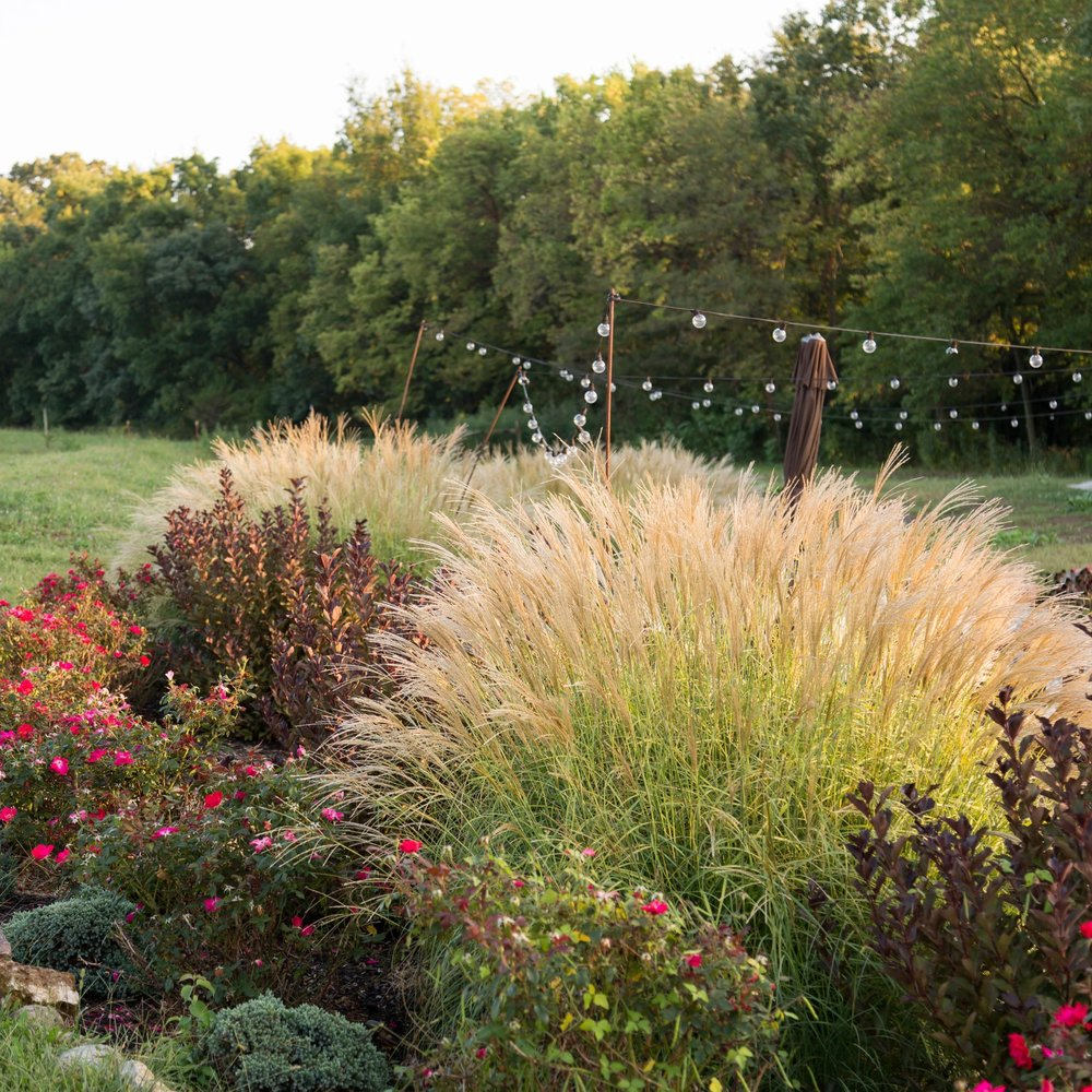 Wine Garden 4.jpg