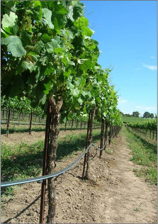 jowler-creek-winery-drip-irrigation.jpg