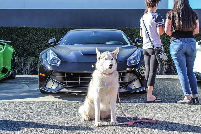 Bring your pup to our next Cars & Coffee in December! #WestlakeGT #OGaraCoach #CuratorsoftheExtraordinary #AstonMartin #Bentley #Bugatti #RollsRoyce #Koenigsegg #Ferrari #Maserati #McLaren #Lamborghini #Pagani #AlfaRomeo