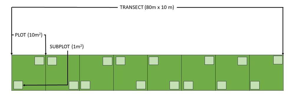 transect.jpg