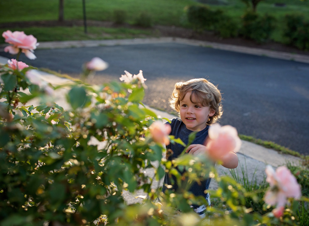 Then I moved a few feet and caught this beautiful moment of a toddler taking a moment to stop and smell the roses.