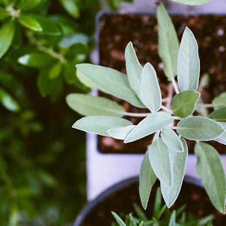 form_450x450_plants.jpg