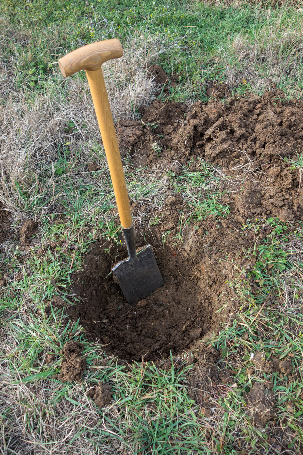 PLANTING TIPS: - The Planting Hole: Getting the hole right in terms of depth and size is a critical step for the survival of your tree.Step 1. Ensure the depth of the hole is equivalent to the depth of the root ball and NO deeper. Planting in a hole that is deeper than the root ball depth can lead to slow growth development, diseases and even death of the plant.Step 2. Ensure that the diameter of the hole is no less than three times the diameter of the root ball, especially in compact soils.A larger hole (in terms of diameter) with sloping sides will create a greater volume of loose cultivated soil that creates aeration which allows for good water penetration for rapid and healthy root growth.