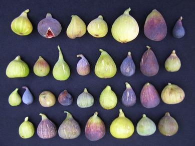 figs 10.jpg