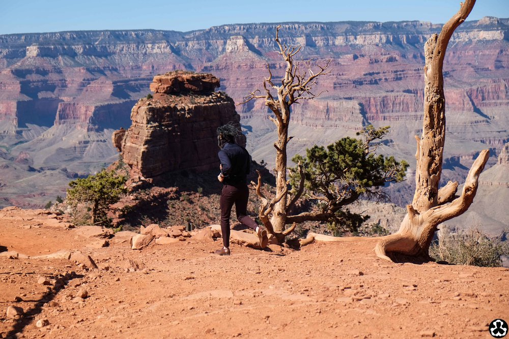camping-the-grand-canyon-ape-is-dapper-11