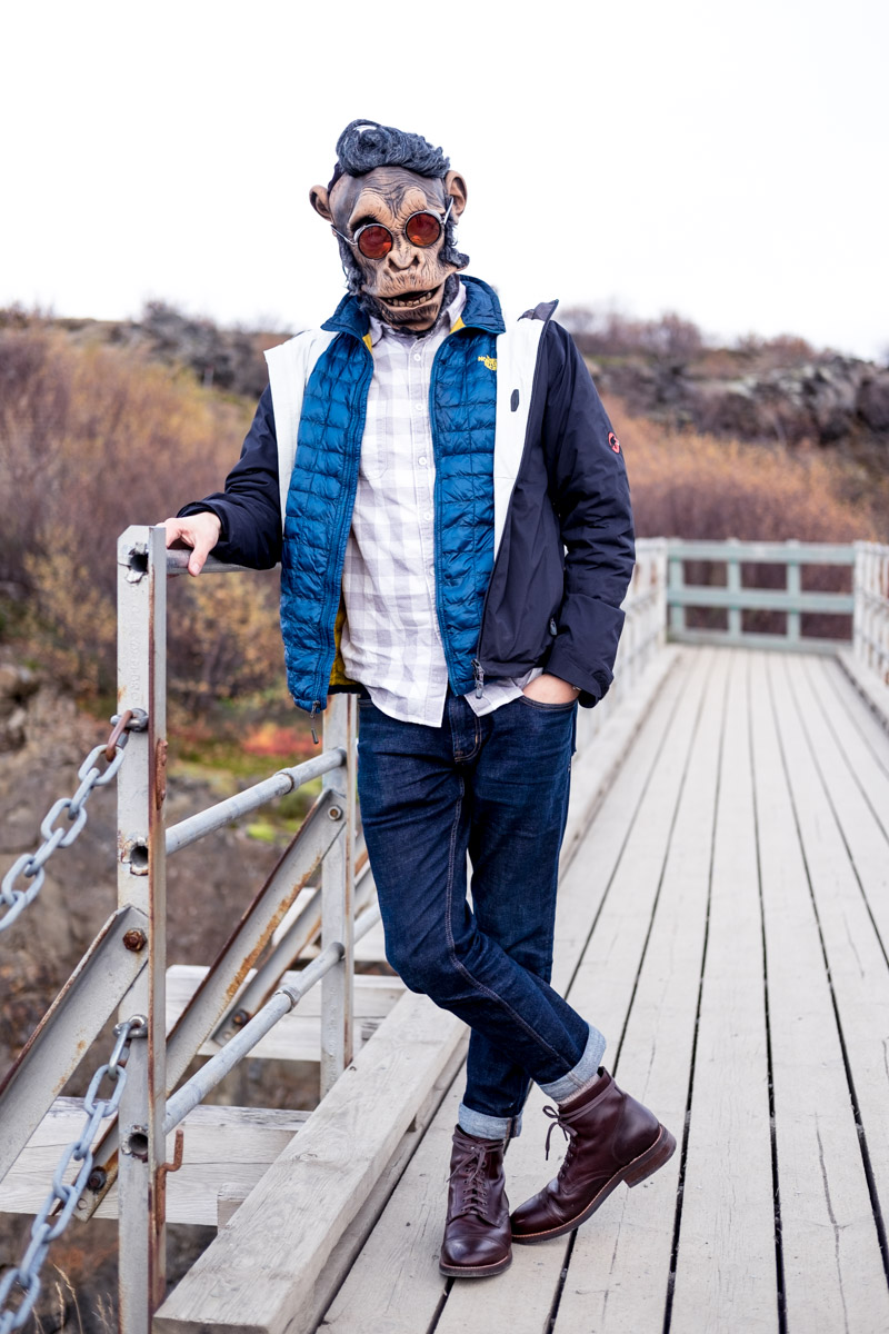 ape is dapper in iceland