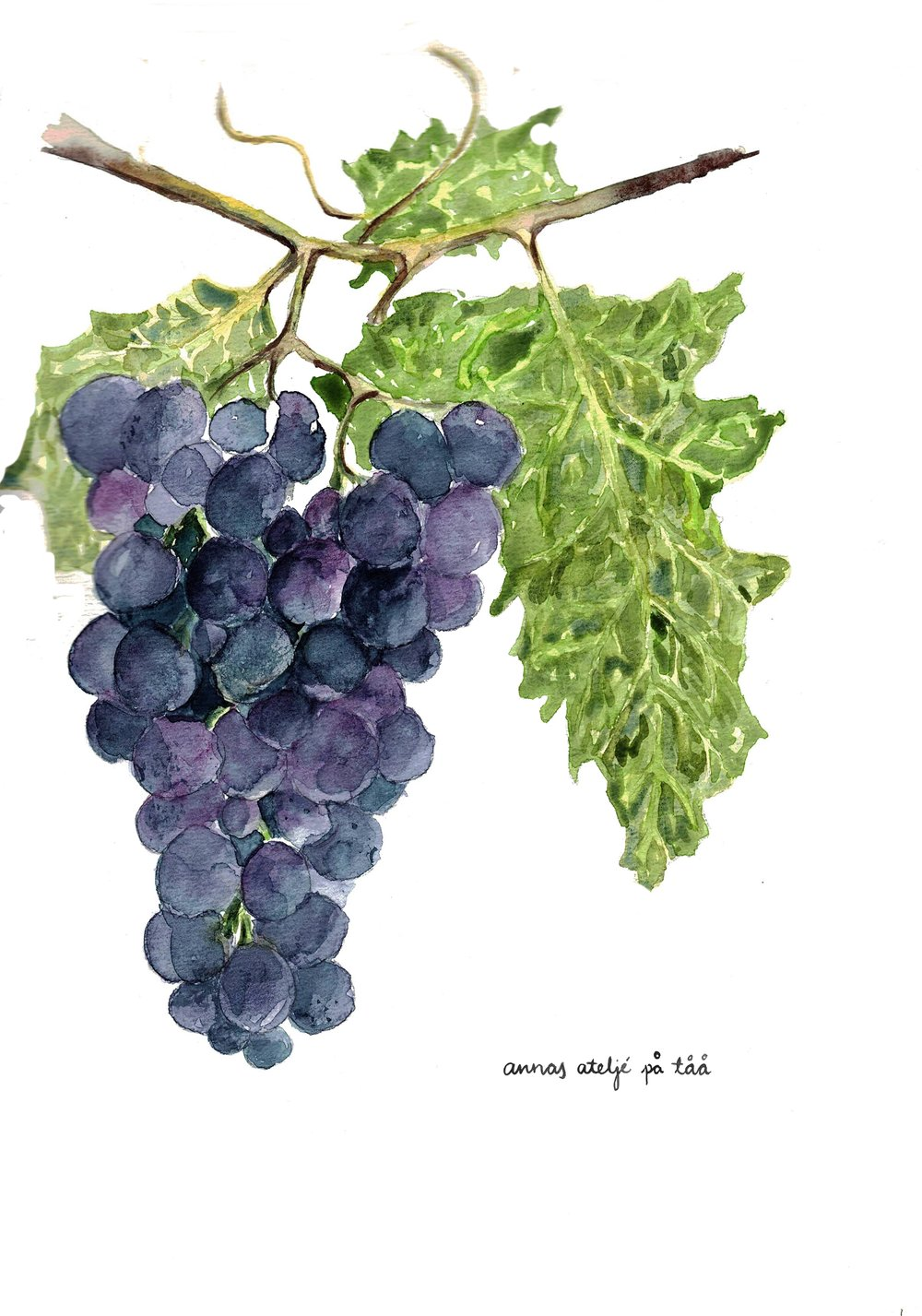 Zilga Grapes Card