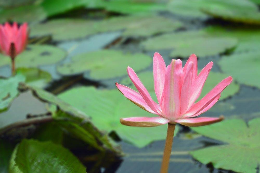 flowerjpg.jpg