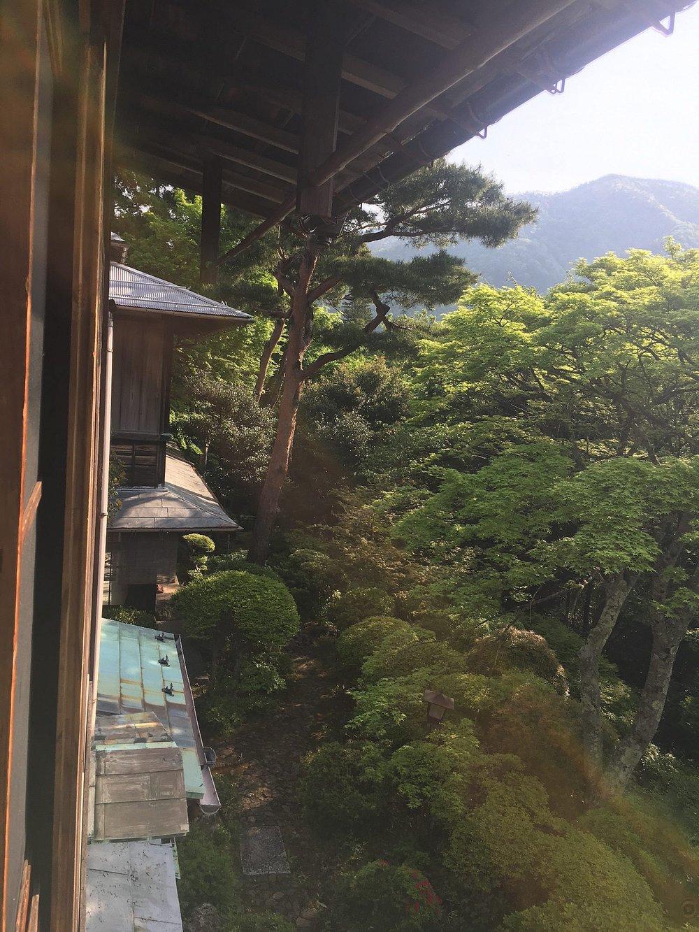 View from my Ryokan window in Gora, Hakone.