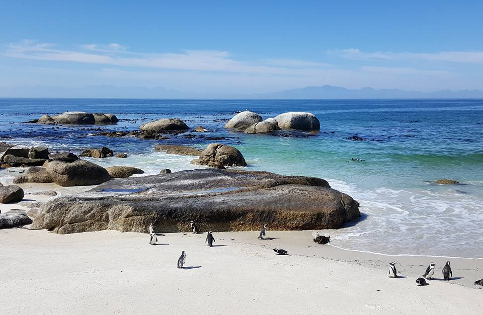 Copy of Penguins in Cape Town, South Africa