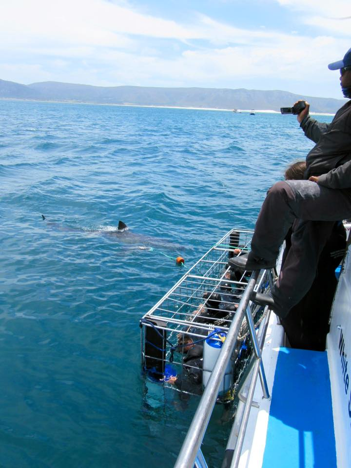 Cage diving with sharks (near Gaansbai, South Africa)